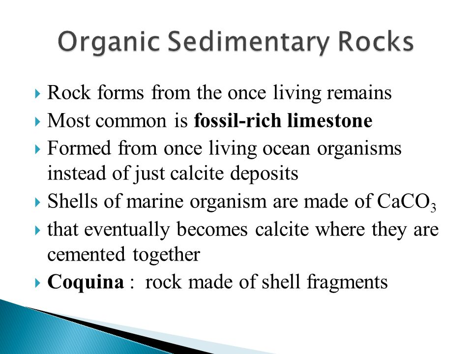  Rock forms from the once living remains  Most common is fossil-rich limestone  Formed from once living ocean organisms instead of just calcite dep
