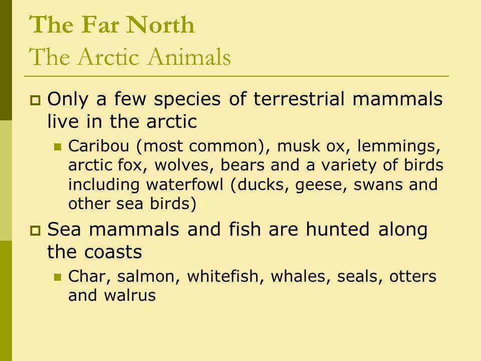 The Far North The Aleutian Tradition c.