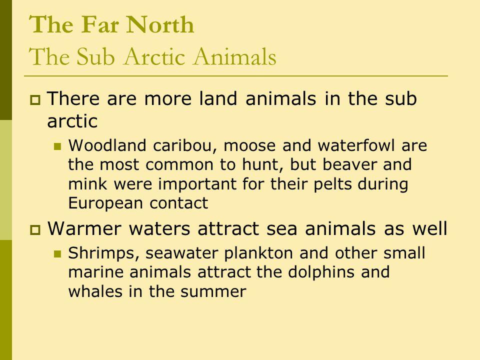 The Far North The Paleo-Arctic Tradition c.