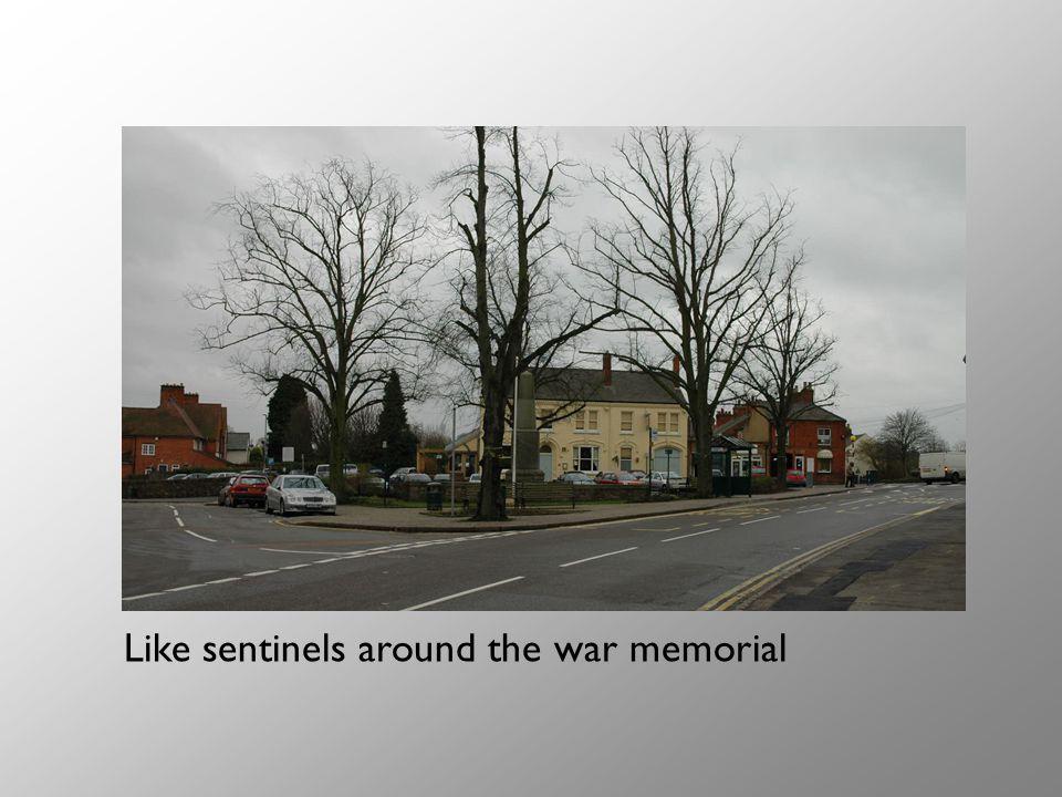 Like sentinels around the war memorial