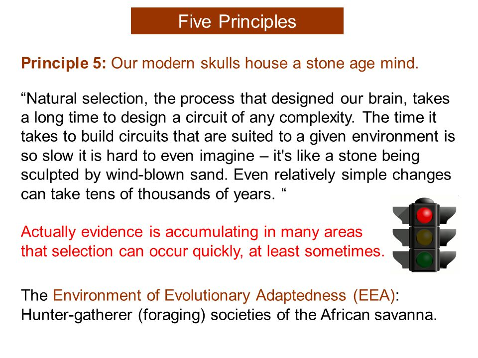 Principle 5: Our modern skulls house a stone age mind.