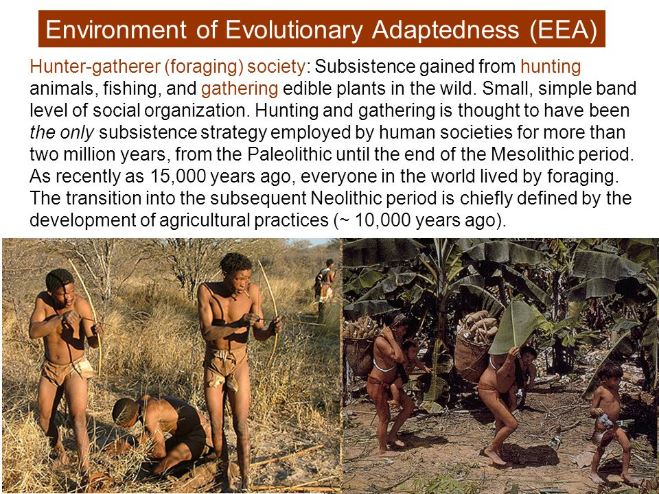Hunter-gatherer (foraging) society: Subsistence gained from hunting animals, fishing, and gathering edible plants in the wild.