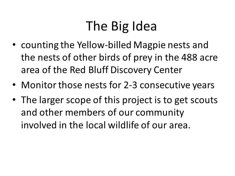 The Big Idea counting the Yellow-billed Magpie nests and the nests of other birds of prey in the 488 acre area of the Red Bluff Discovery Center Monitor those nests for 2-3 consecutive years The larger scope of this project is to get scouts and other members of our community involved in the local wildlife of our area.