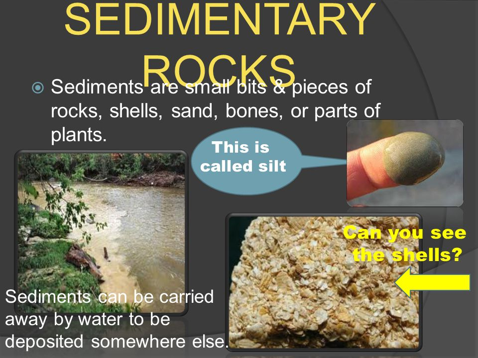 SEDIMENTARY ROCKS  Sediments are small bits & pieces of rocks, shells, sand, bones, or parts of plants. Can you see the shells? This is called silt S