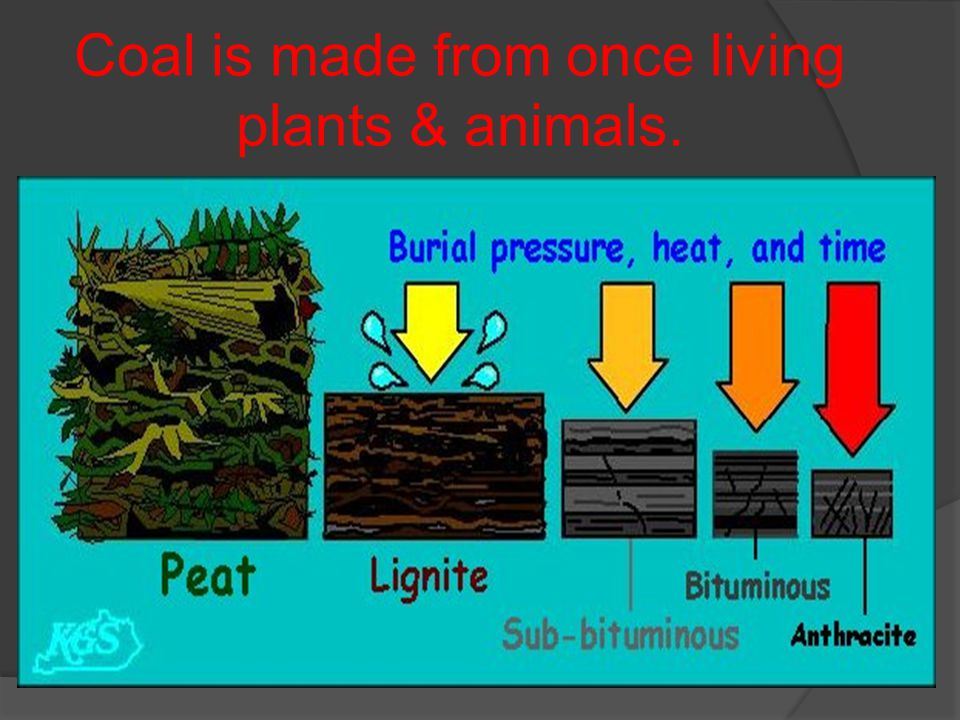 Coal is made from once living plants & animals.
