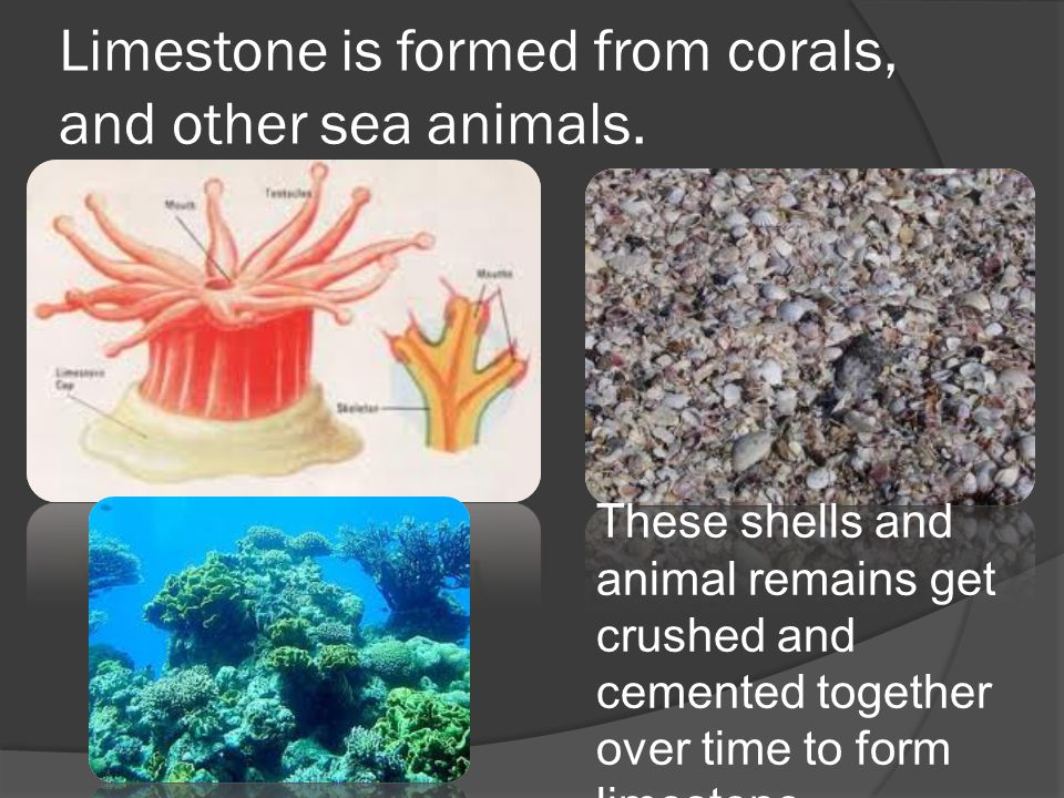 Limestone is formed from corals, and other sea animals. These shells and animal remains get crushed and cemented together over time to form limestone.