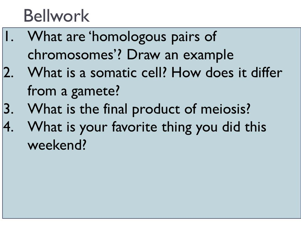 Bellwork 1.What are 'homologous pairs of chromosomes'? Draw an example 2.What is a somatic cell? How does it differ from a gamete? 3.What is the final