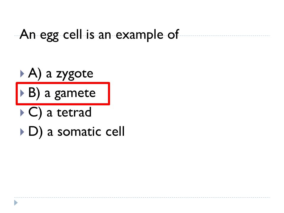 An egg cell is an example of  A) a zygote  B) a gamete  C) a tetrad  D) a somatic cell