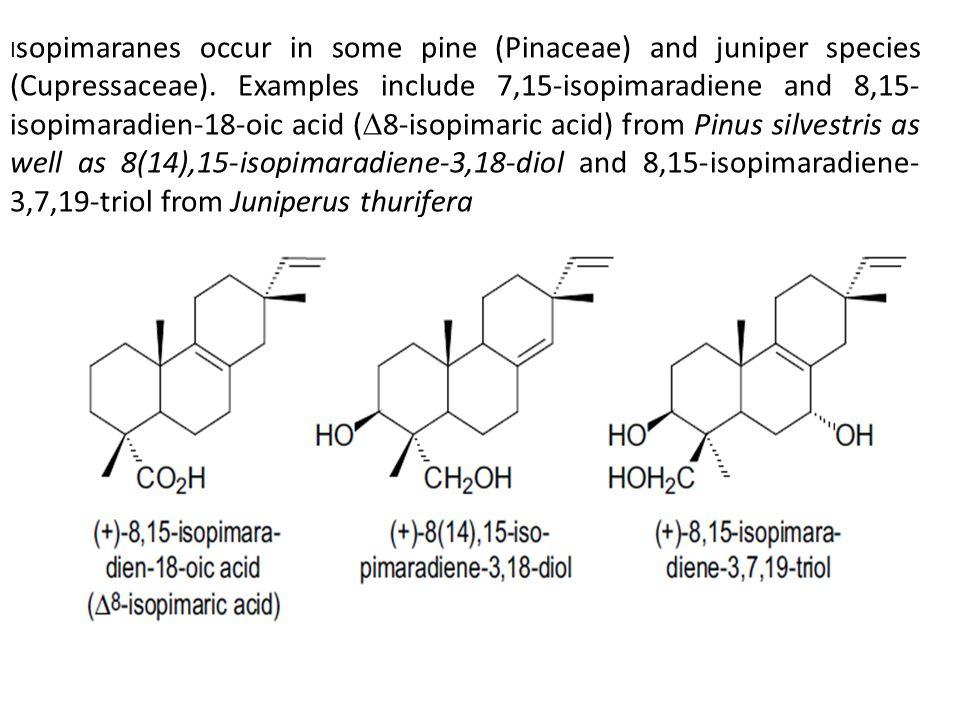 I sopimaranes occur in some pine (Pinaceae) and juniper species (Cupressaceae).