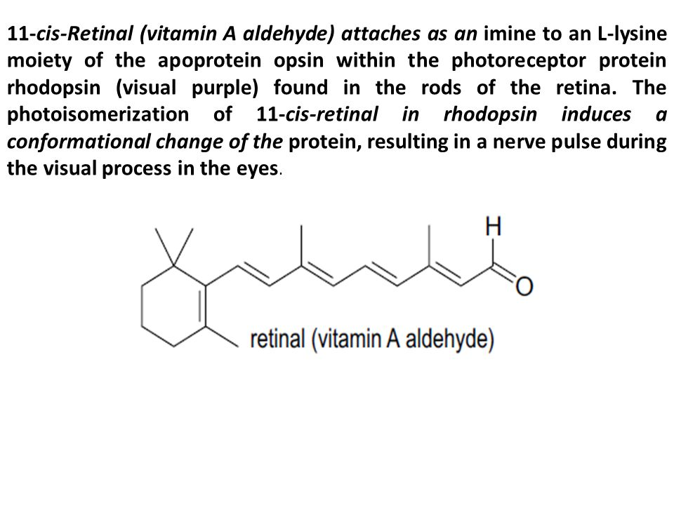 11-cis-Retinal (vitamin A aldehyde) attaches as an imine to an L-lysine moiety of the apoprotein opsin within the photoreceptor protein rhodopsin (vis