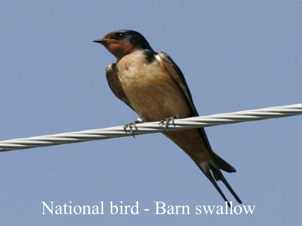 National bird - Barn swallow