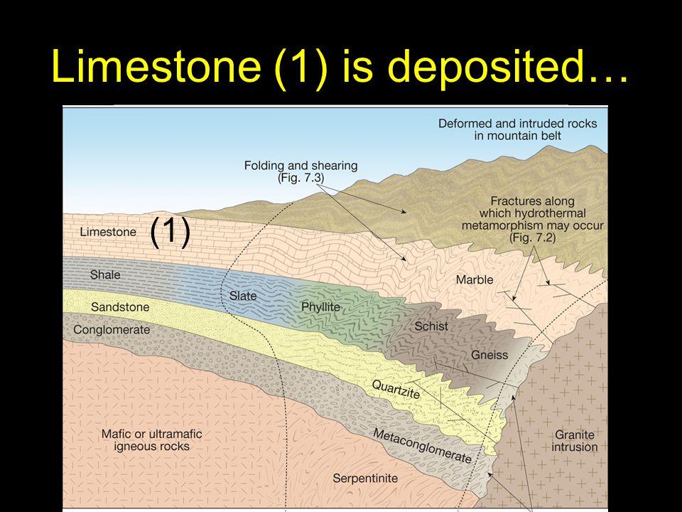 30 Limestone (1) is deposited… (1)