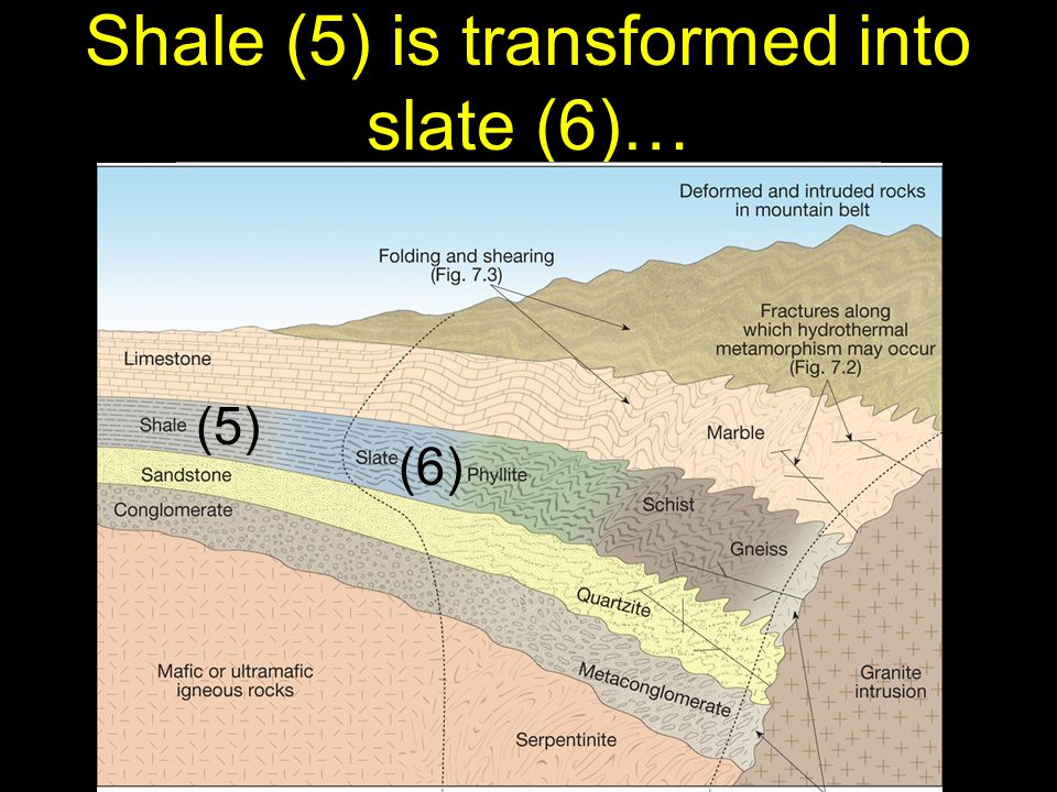 42 Shale (5) is transformed into slate (6)… (5) (6)