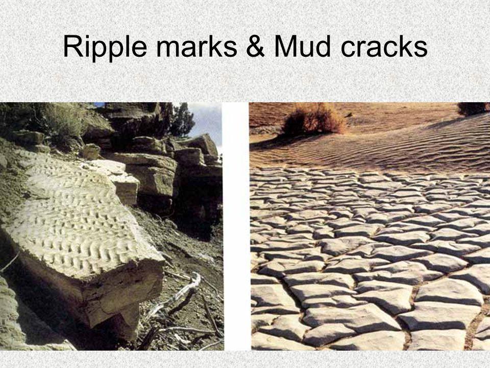 Ripple marks & Mud cracks