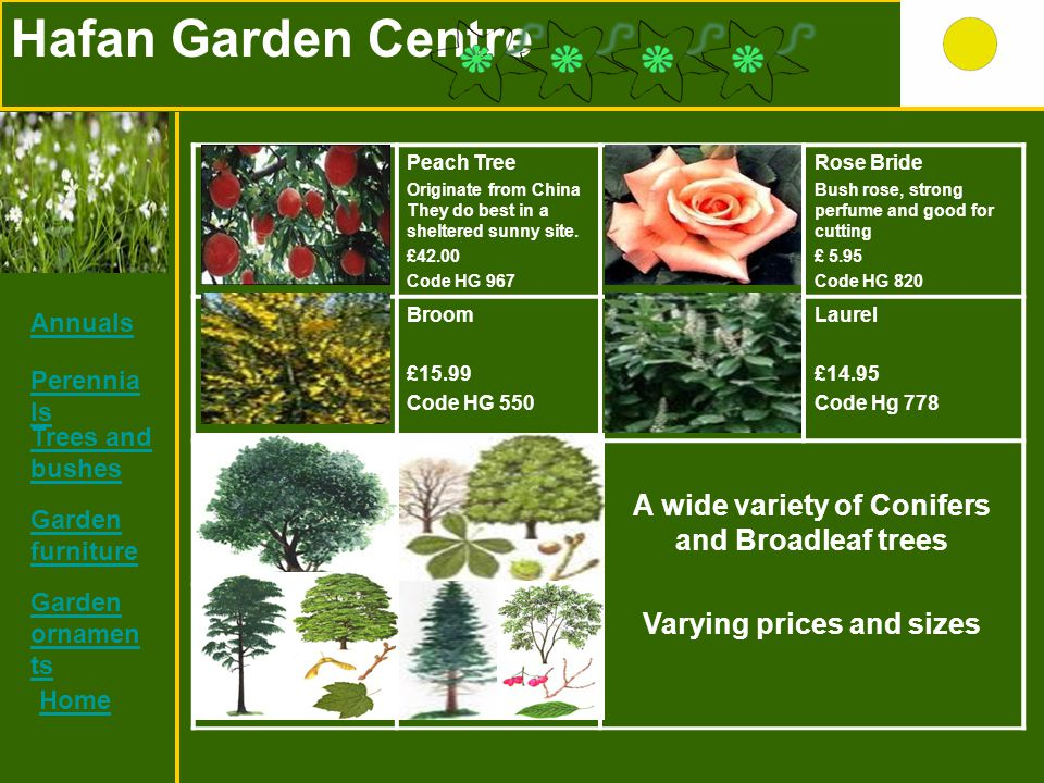 Hafan Garden Centre Peach Tree Originate from China They do best in a sheltered sunny site. £42.00 Code HG 967 Rose Bride Bush rose, strong perfume an