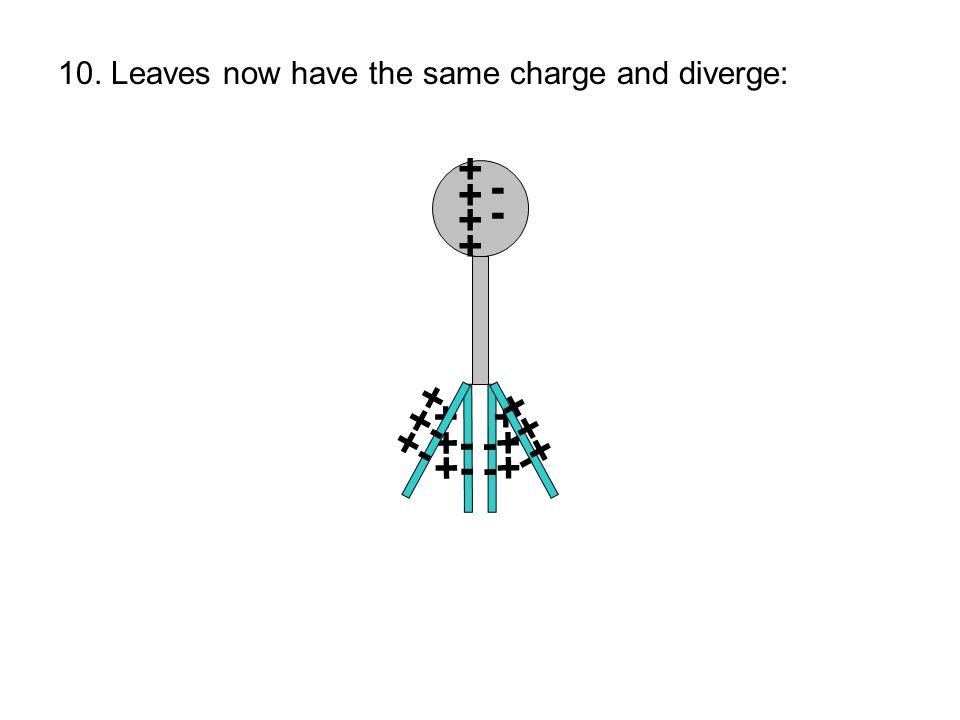 ++++++++ + +- + -+ ---- 10. Leaves now have the same charge and diverge: + +- + -+