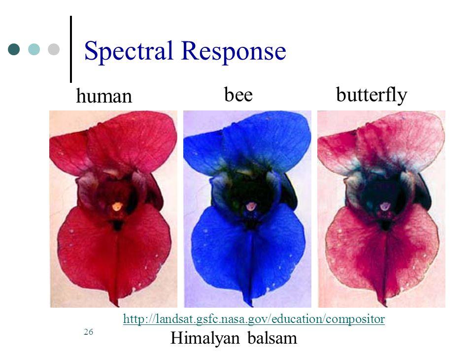 26 Spectral Response http://landsat.gsfc.nasa.gov/education/compositor Himalyan balsam human beebutterfly
