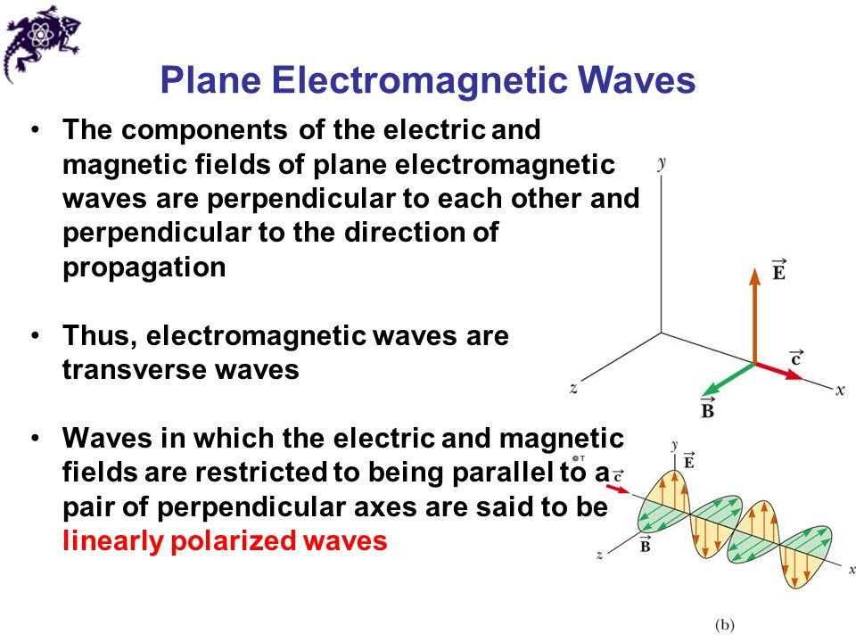 Plane Electromagnetic Waves The components of the electric and magnetic fields of plane electromagnetic waves are perpendicular to each other and perp