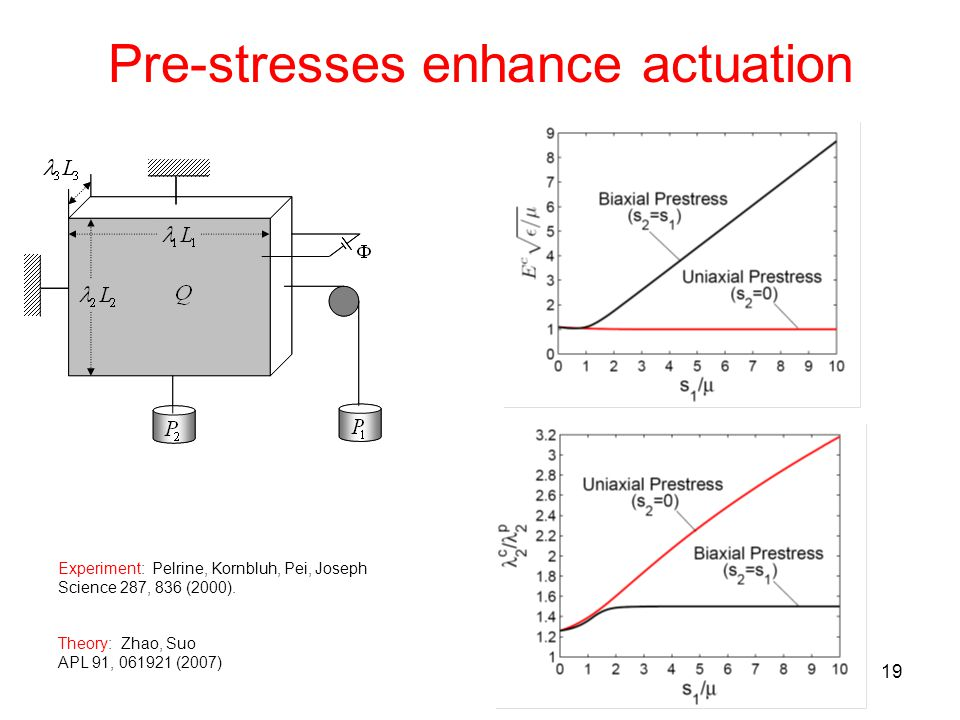 19 Pre-stresses enhance actuation Experiment: Pelrine, Kornbluh, Pei, Joseph Science 287, 836 (2000).