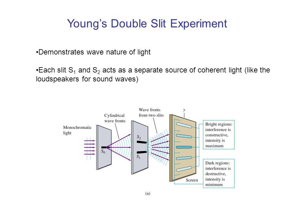 Young's Double Slit Experiment Demonstrates wave nature of light Each slit S 1 and S 2 acts as a separate source of coherent light (like the loudspeakers for sound waves)