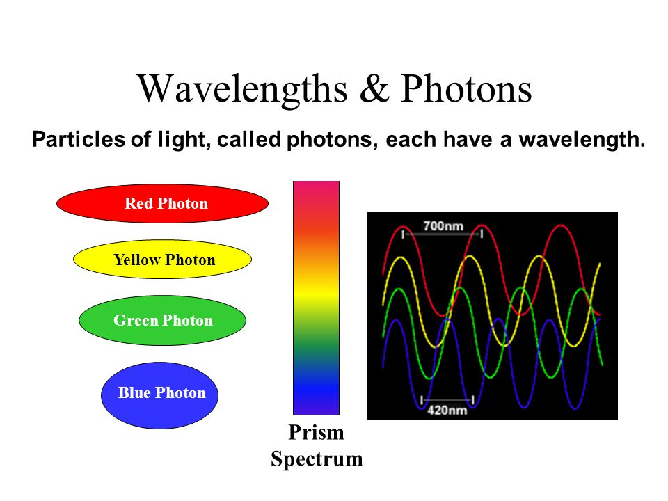 Wavelengths & Photons Red Photon Blue Photon Green Photon Yellow Photon Prism Spectrum Particles of light, called photons, each have a wavelength.
