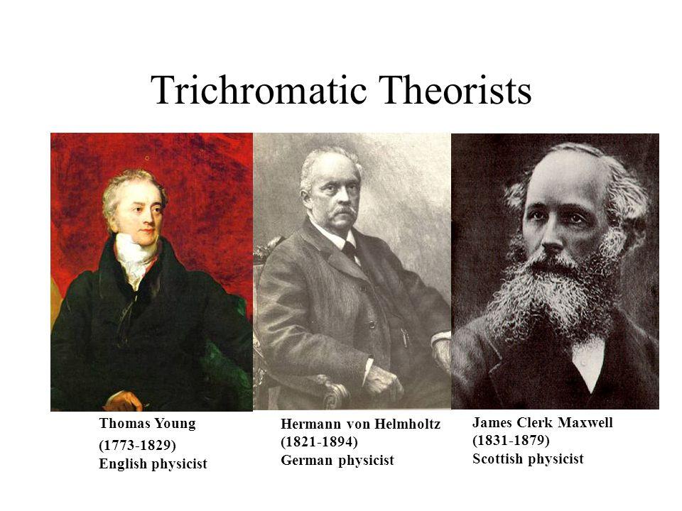 Trichromatic Theorists Thomas Young (1773-1829) English physicist Hermann von Helmholtz (1821-1894) German physicist James Clerk Maxwell (1831-1879) S