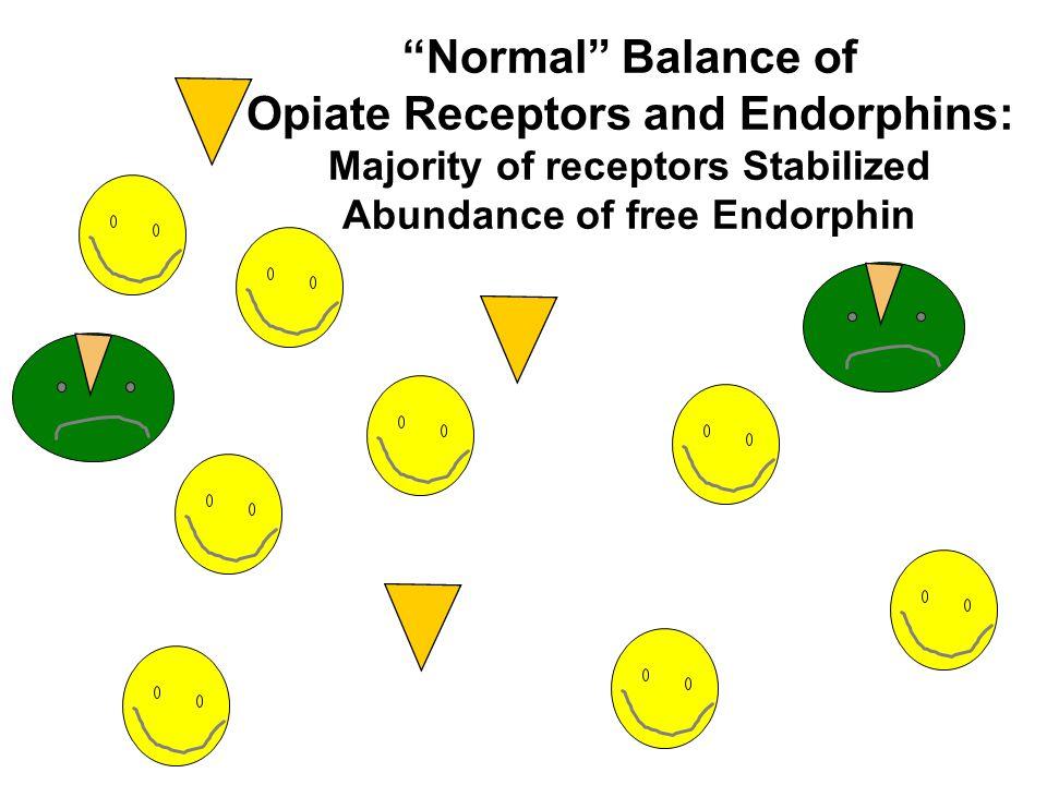 """Normal"" Balance of Opiate Receptors and Endorphins: Majority of receptors Stabilized Abundance of free Endorphin"