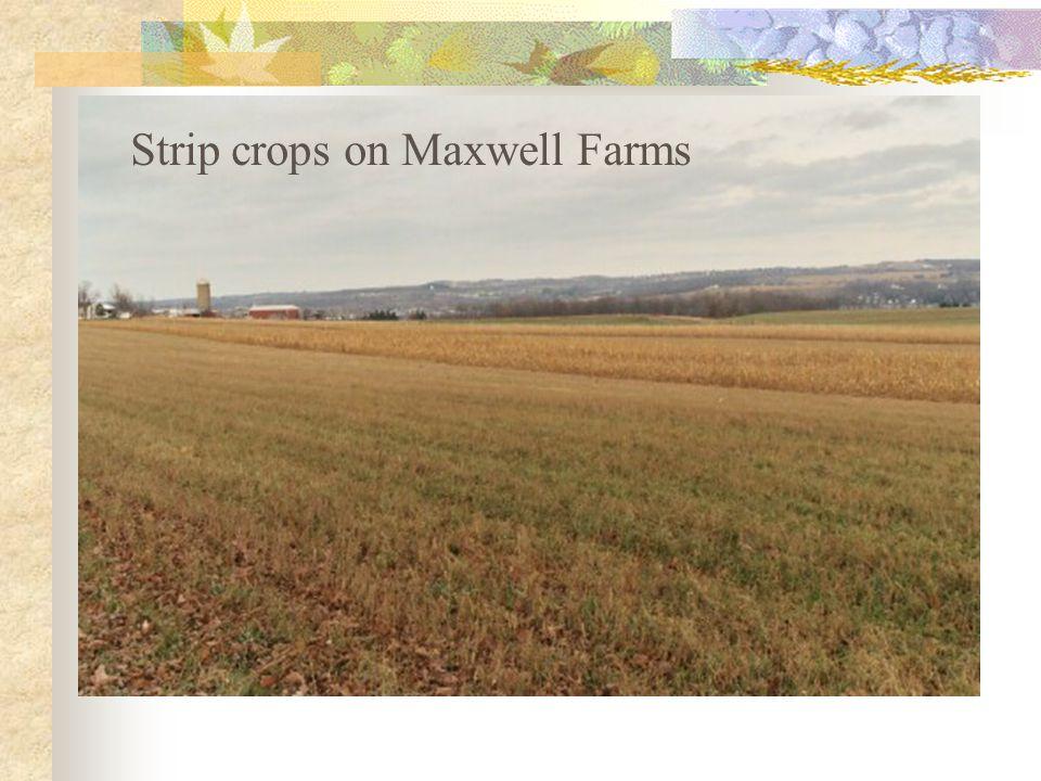 Strip crops at Maxwell Farms