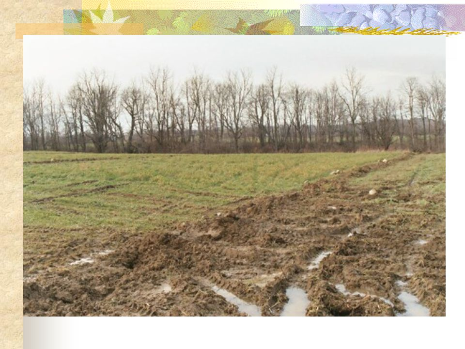Land Management Practices Purchased additional farm land & buildings Tile (sub-surface) Drainage – 60000 feet installed since 2001 Strip cropping on home farm Strip cropping, grass filter strips – south of cow barn in runoff area Permanent sod on east field – farm runoff