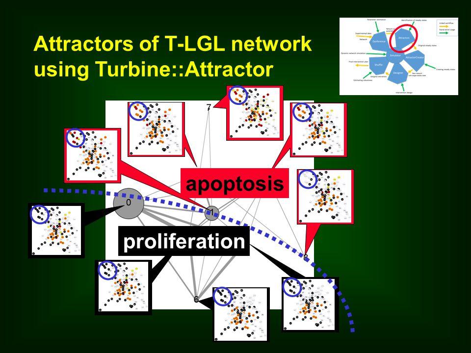 Attractors of T-LGL network using Turbine::Attractor proliferation apoptosis