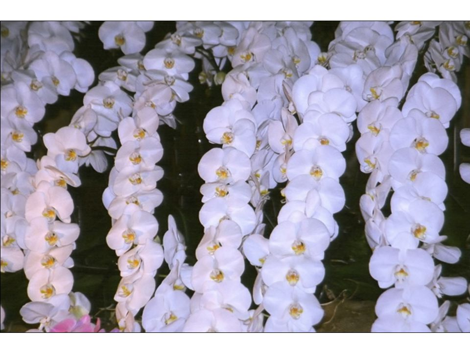 Difference due to pre-submerge in Tap water Orchiata bark #9Orchiata bark #5 Orchiata bark #8 w/ w/o