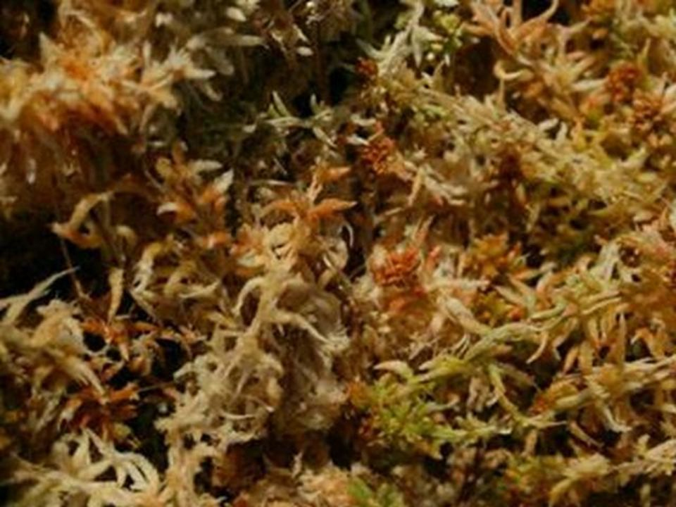 Experiment of tightness of Sphagnum Moss filled in a pot