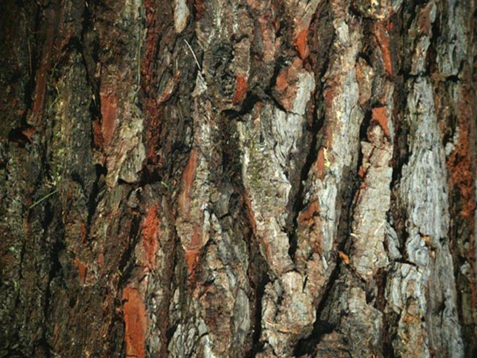 Bulk Density, g/cm 3 Orchiata Bark No.Bulk density Sp.