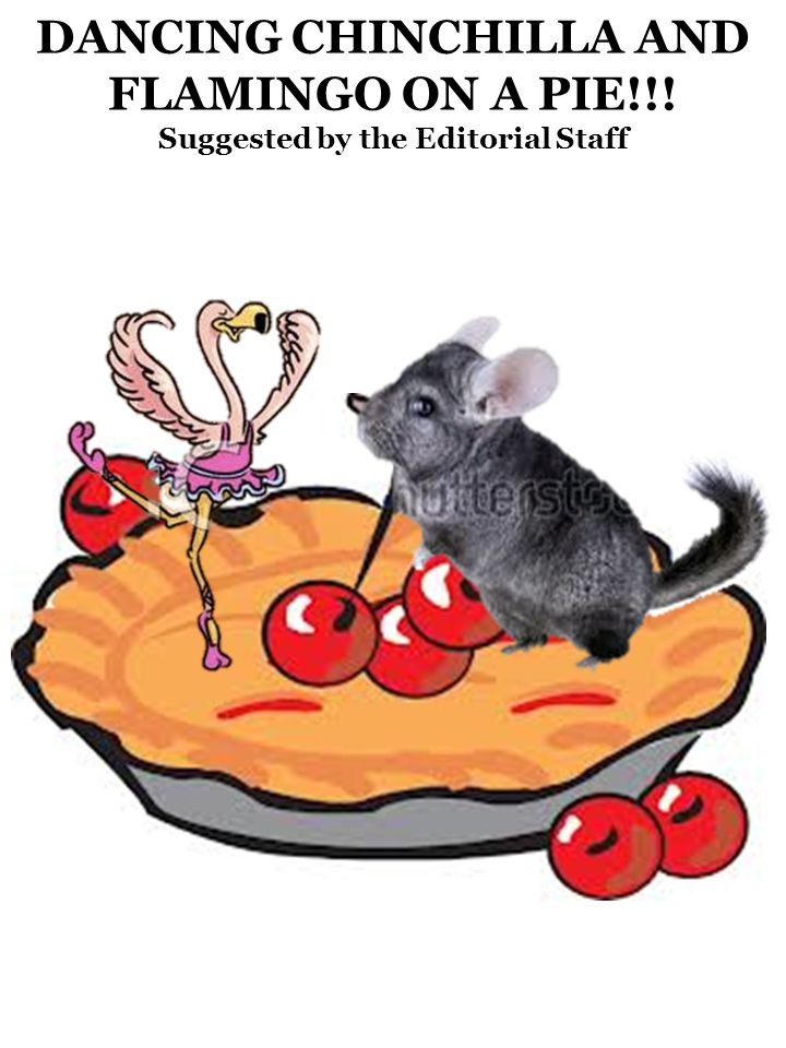 DANCING CHINCHILLA AND FLAMINGO ON A PIE!!! Suggested by the Editorial Staff