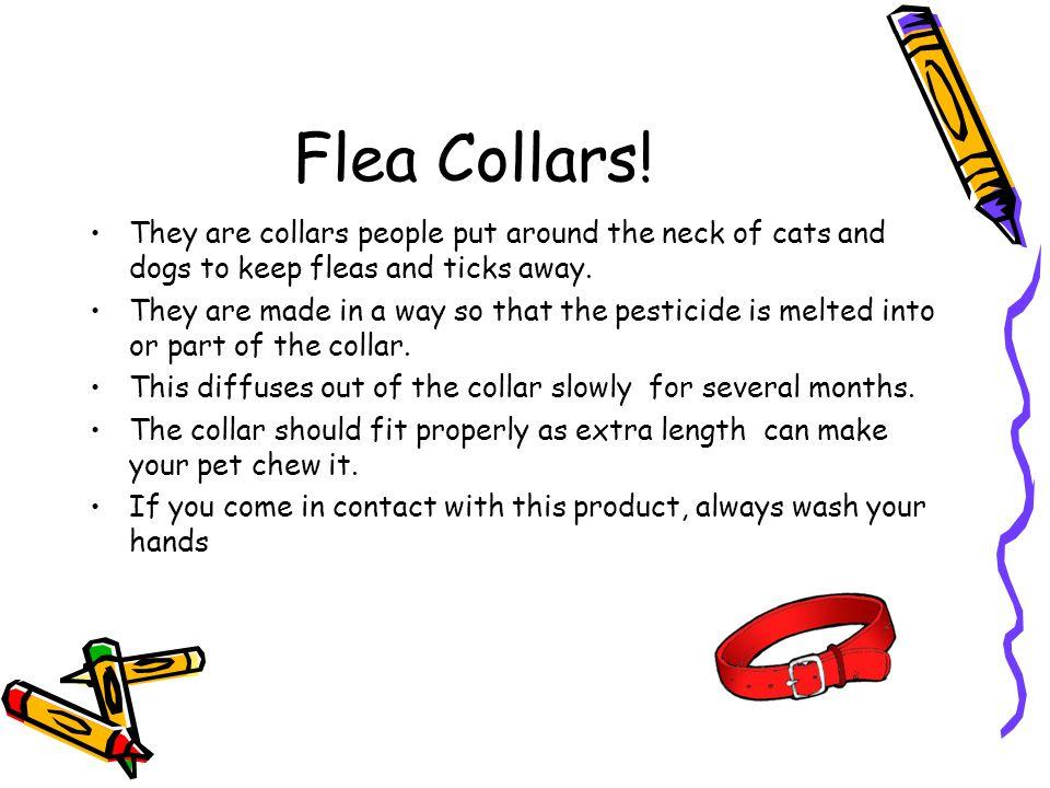 Flea Collars.