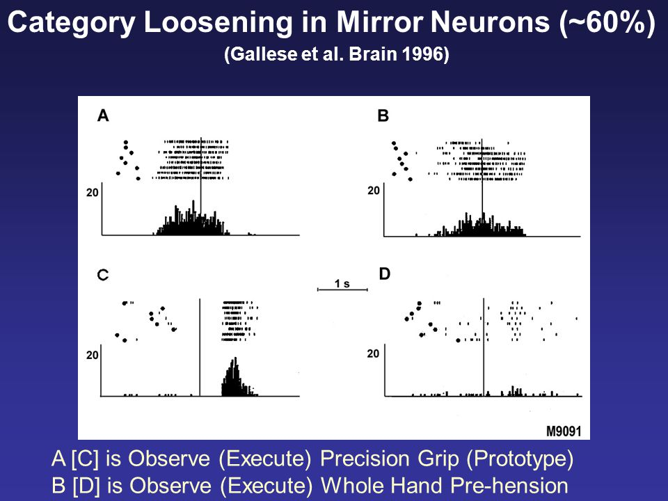 Category Loosening in Mirror Neurons (~60%) (Gallese et al. Brain 1996) A [C] is Observe (Execute) Precision Grip (Prototype) B [D] is Observe (Execut