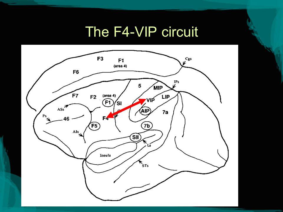 The F4-VIP circuit