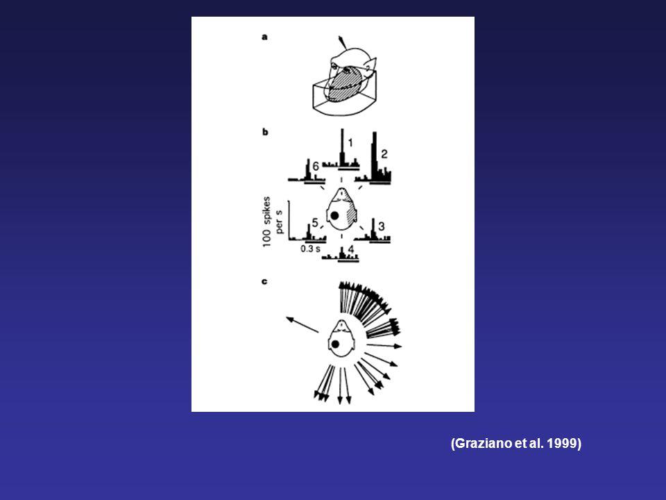 (Graziano et al. 1999)