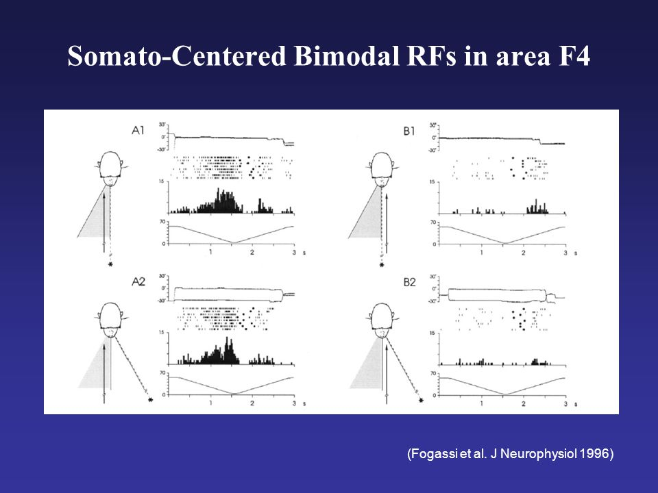 Somato-Centered Bimodal RFs in area F4 (Fogassi et al. J Neurophysiol 1996)