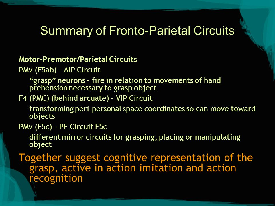 "Summary of Fronto-Parietal Circuits Motor-Premotor/Parietal Circuits PMv (F5ab) – AIP Circuit ""grasp"" neurons – fire in relation to movements of hand"