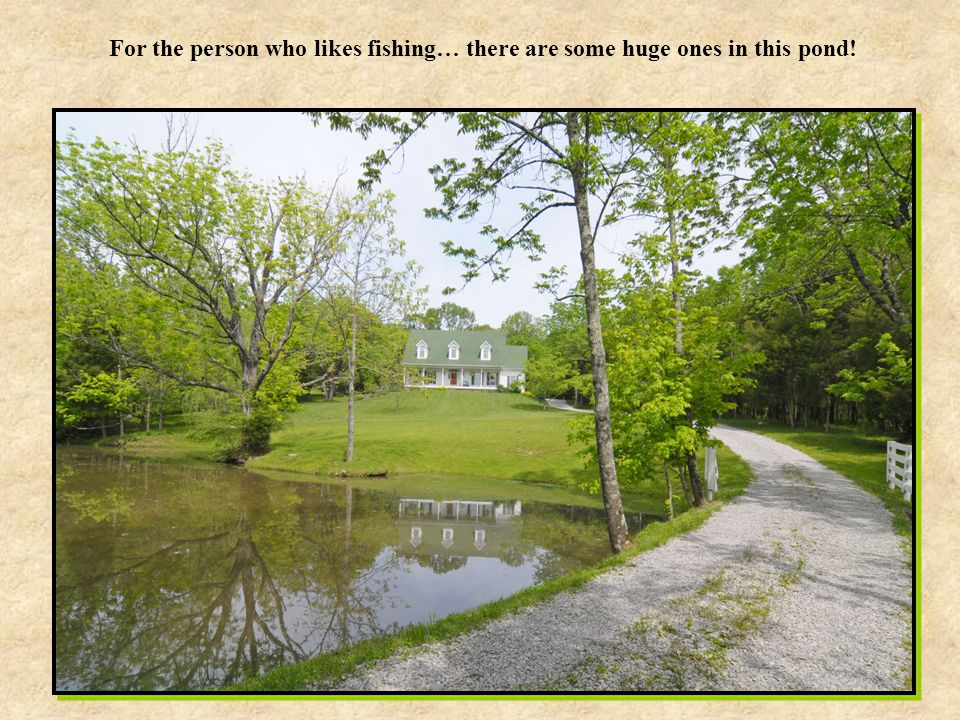 For the person who likes fishing… there are some huge ones in this pond!
