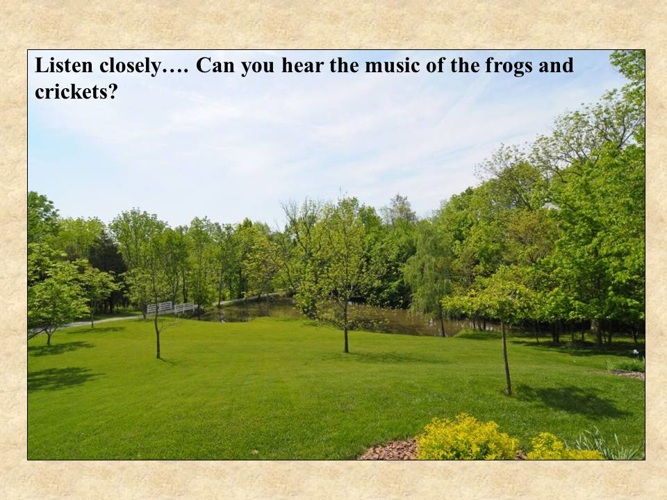 Listen closely…. Can you hear the music of the frogs and crickets?
