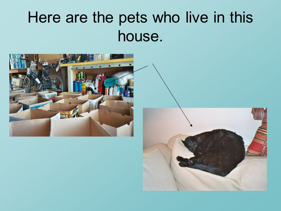 Here are the pets who live in this house.