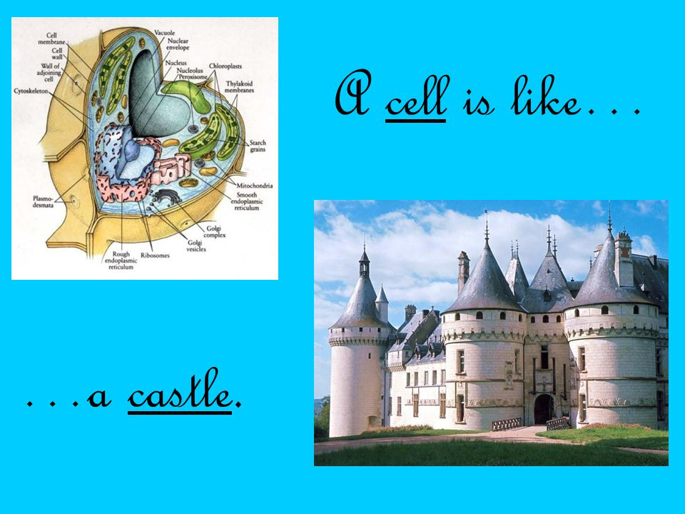 The nucleus is like the owner because the owner controls the castle: what they do to it, how they manage it, and how they live in it day to day.