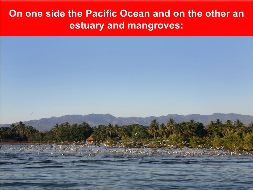 On one side the Pacific Ocean and on the other an estuary and mangroves: