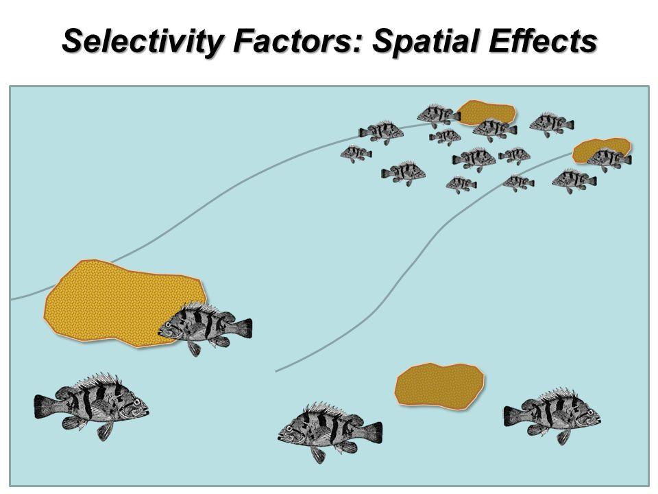 Selectivity Factors: Spatial Effects
