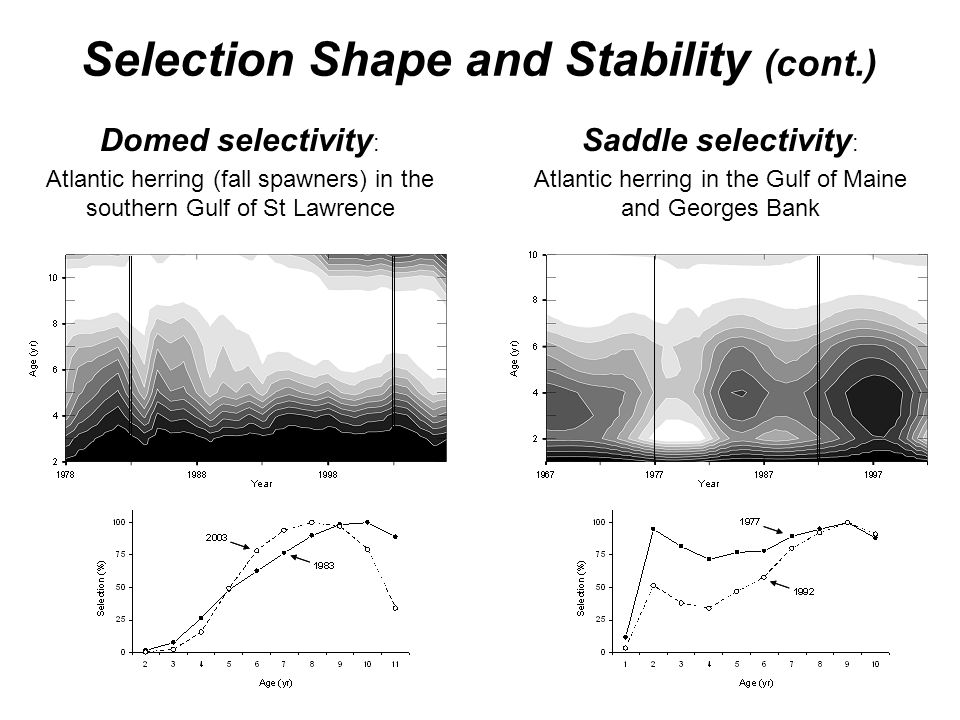 Selection Shape and Stability (cont.) Domed selectivity : Atlantic herring (fall spawners) in the southern Gulf of St Lawrence Saddle selectivity : At