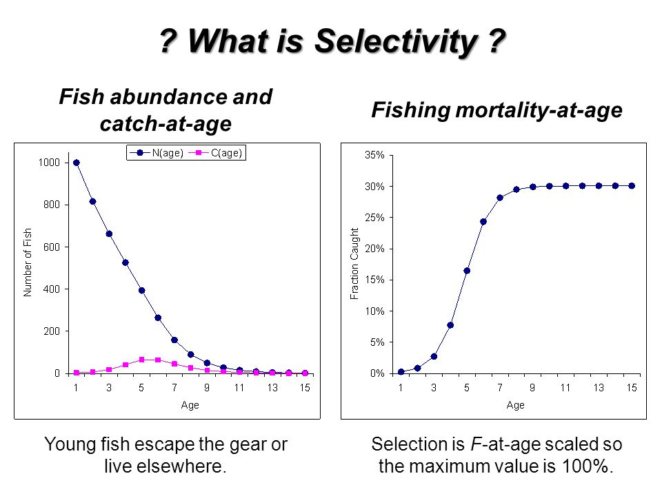 ? What is Selectivity ? Fish abundance and catch-at-age Fishing mortality-at-age Young fish escape the gear or live elsewhere. Selection is F-at-age s