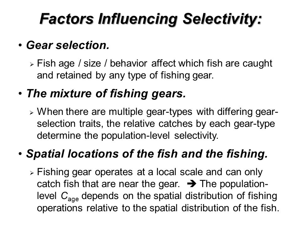 Factors Influencing Selectivity: Gear selection.  Fish age / size / behavior affect which fish are caught and retained by any type of fishing gear. T