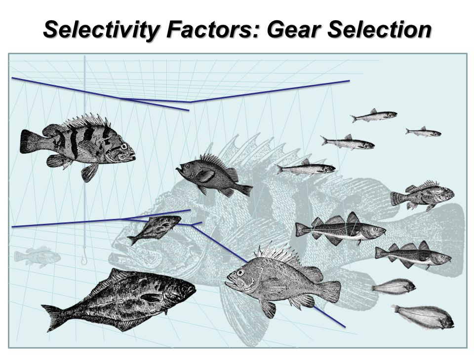 Selectivity Factors: Gear Selection
